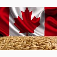 Продам посевной материал канадского ячменя Аспин (Аспен) / ASPEN