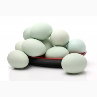 Яйцо утки стар 53