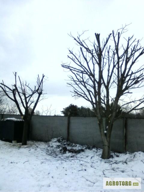 Обрезка деревьев киев кронирование